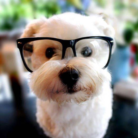 Pintarestより犬の目がね画像