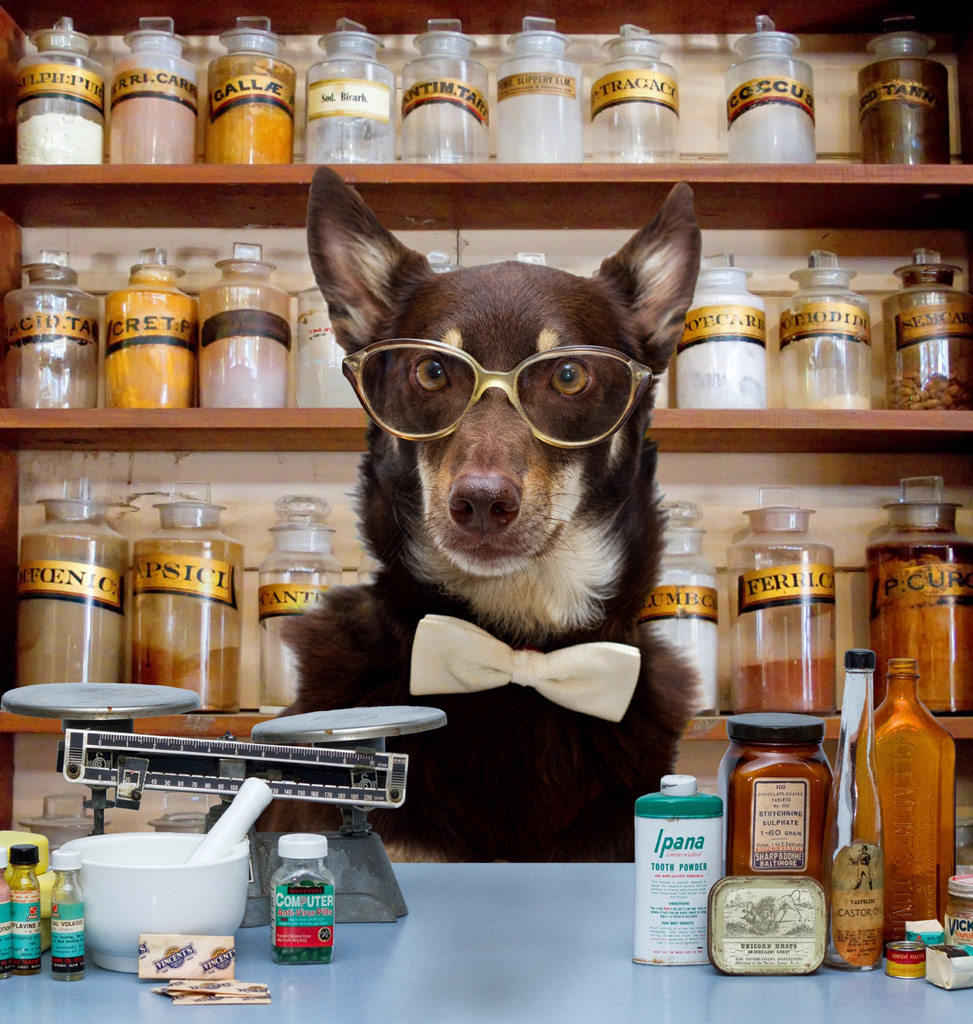 GATAG|フリー画像・写真素材集 4.0より犬めがね